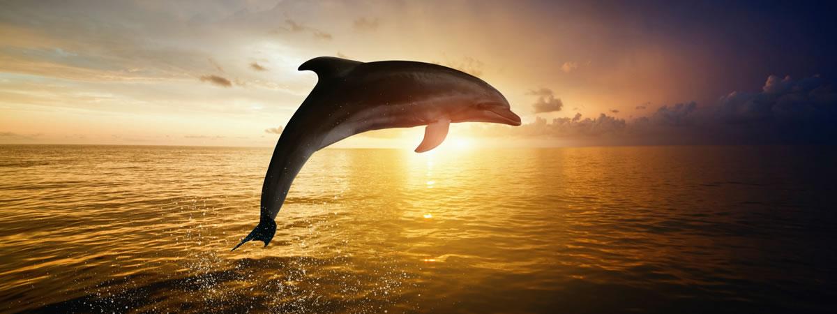 dolphin-spotting-cruises-banner