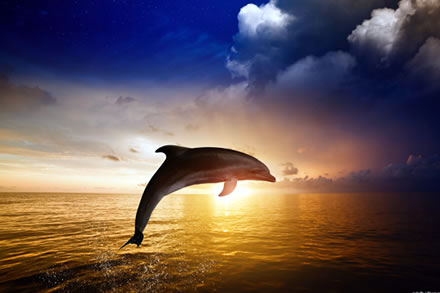 dolphin-spotting-cruises